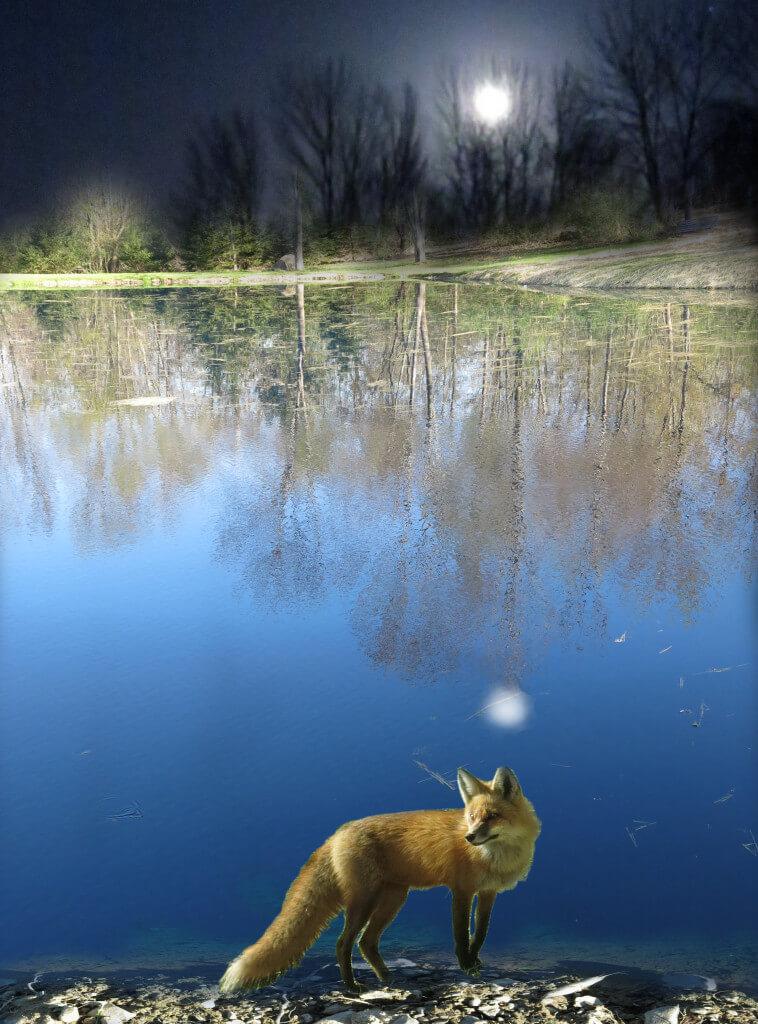 FOXBLUEPOND