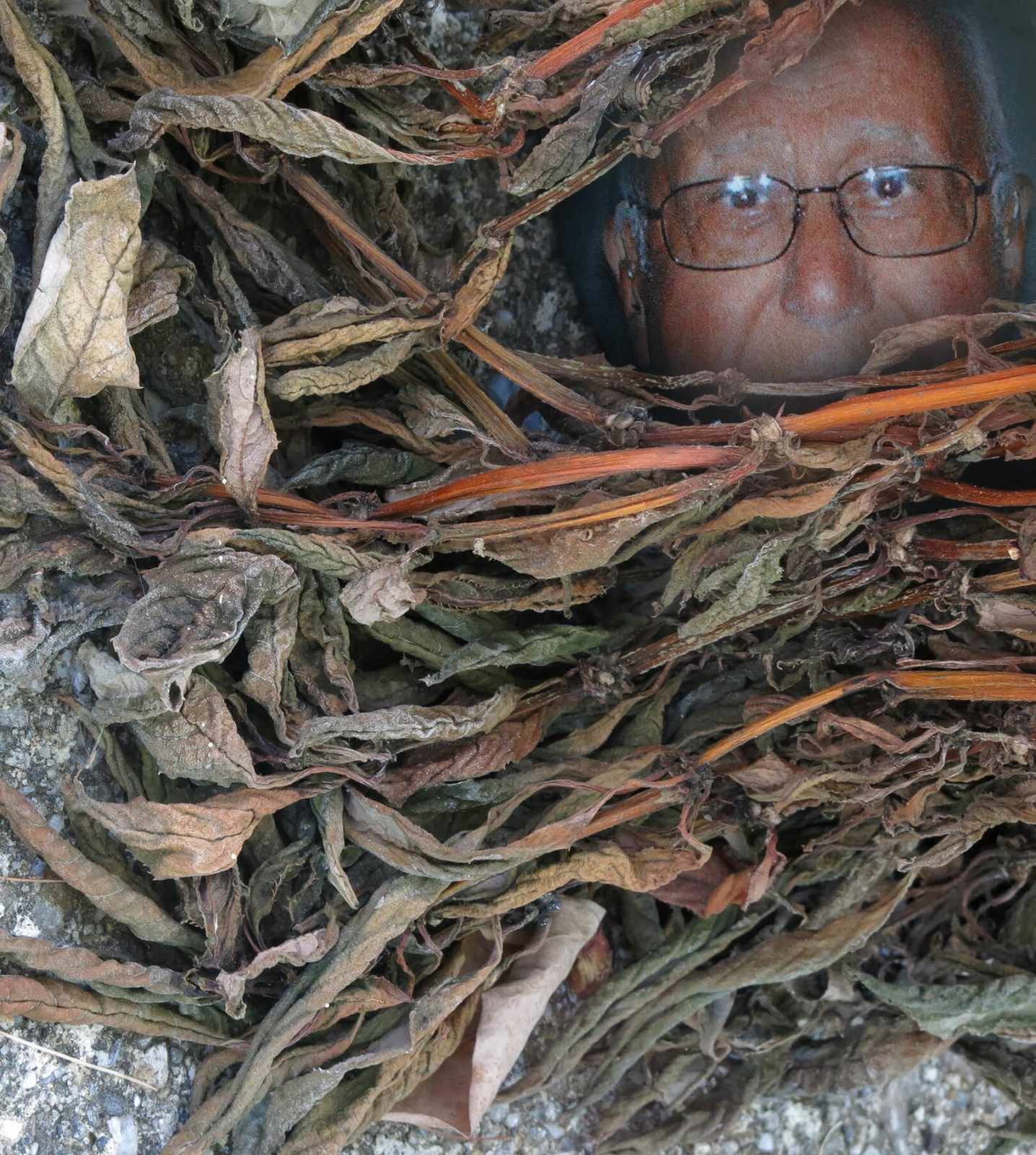 Father of Robin Botie in Ithaca, New York, peaks out from behind dead plants.