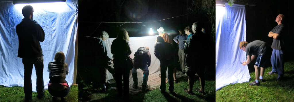 Robin Botie of Ithaca, New York attends Moth Night with Cornell University Insect Collection.