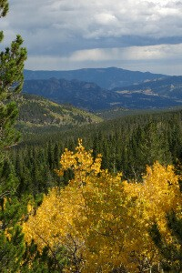 Yellow Bush for Courage - Robin Botie of Ithaca, New York, photographs the aspens turning yellow in the Rocky Mountains.