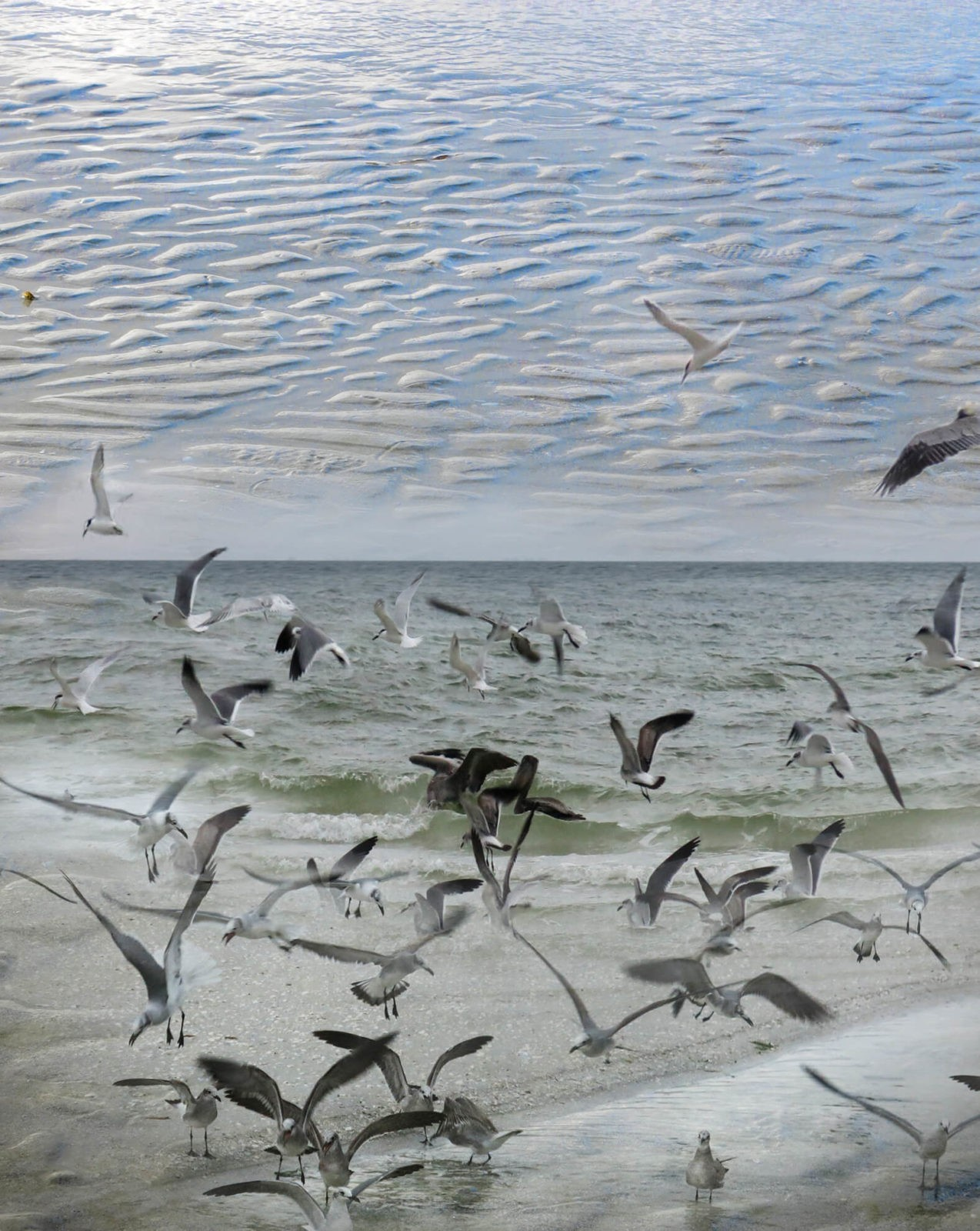 Robin Botie of Ithaca, New York, photographs birds in flight on the beach in Sanibel, Florida.