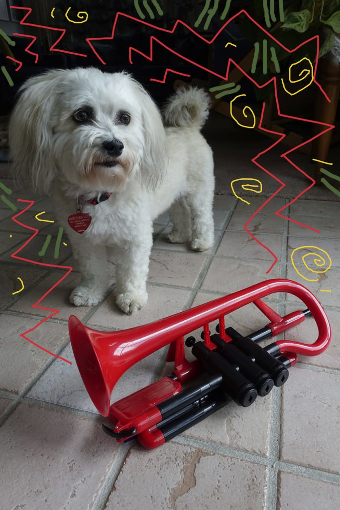 Robin Botie of Ithaca, New York, photoshops her dog and her new red pcornet bought to practice her embouchure for bugle playing.