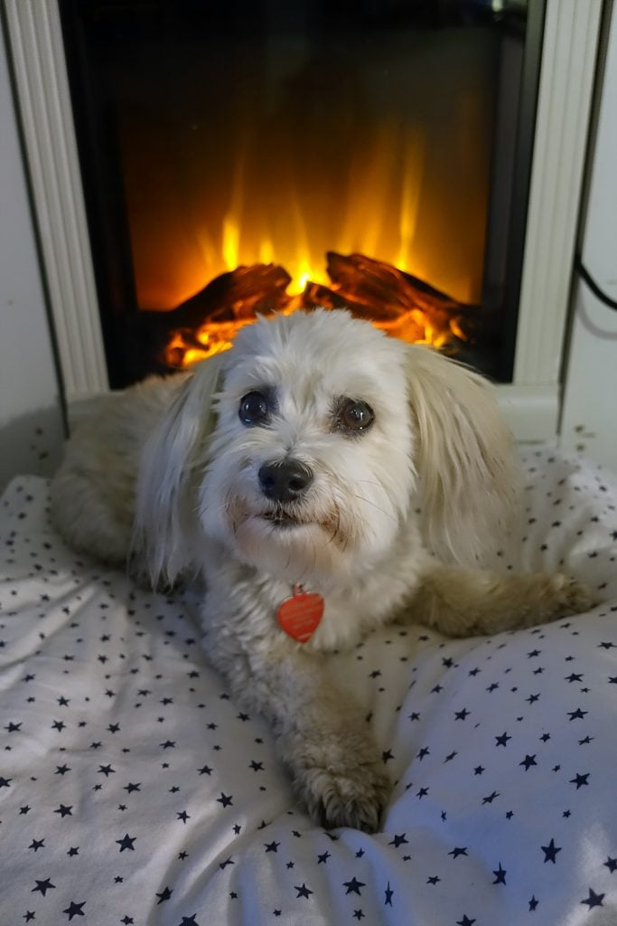 Happy Thanksgiving from Robin Botie of Ithaca, New York, photographs her dog in front of the new fake fireplace she gifted herself for Thanksgiving.