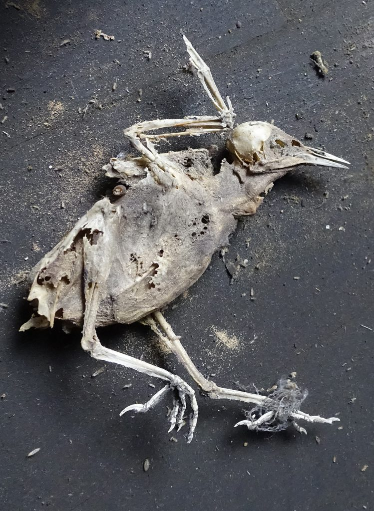 Robin Botie of ithaca, New York, is glad Thanksgiving is over. Found dead bird. Is ready to tackle the next holiday.