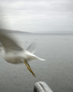 Robin Botie of Ithaca, New York, photographs a seagull flying off over Cayuga Lake.