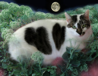 Robin Botie in Ithaca, New York, photoshops a portrait of the cat she had euthanized.