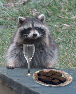 In Ithaca, New York, Robin Botie Photoshops brownies and a glass of wine in front of a raccoon that sits, waiting on the deck of her home.